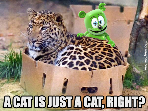 a cat is just a cat right