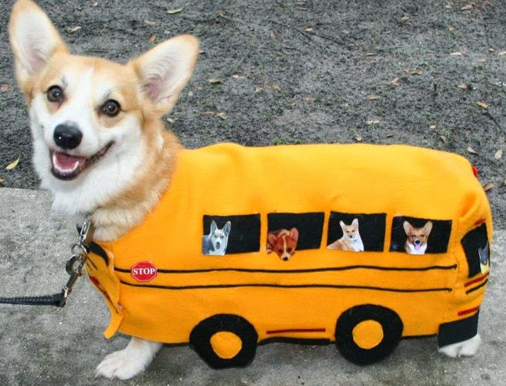 cute adorable corgi school bus halloween costume im a gummy bear song gummybear gummibar youtube youtuber & Day after Labor Day means BACK TO SCHOOL! ADORABLE CORGI!!! - Gummibär