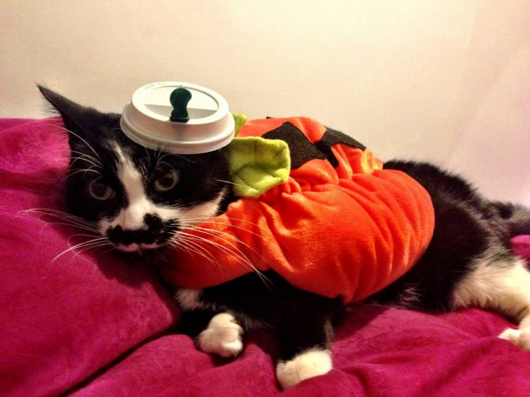 pumpkinspicedkitty