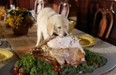 puppy funny cute thanksgiving turkey dinner holiday 2016 adorable food