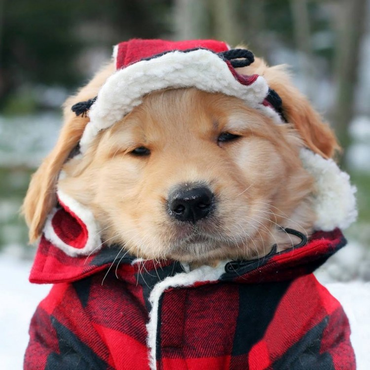 cute adorable puppy lumberjack winter cold christmas holiday 2016