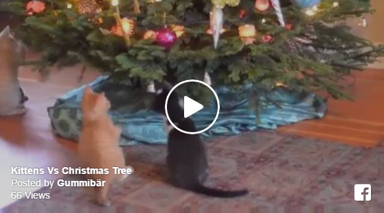 kittens versus vs christmas tree happy holidays merry christmas cute adorable animals funny decorations