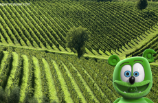italy tuscany vineyards around the world with gummibar gummy bear song HD youtube cartoon youtuber