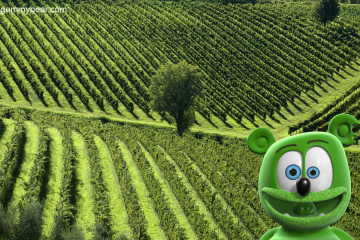 italy tuscany vineyards around the world with gummibar gummy bear song HD youtube cartoon youtuber