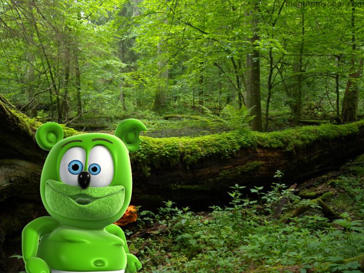 polandbiałowiezaforest