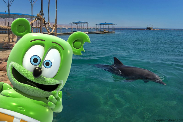 dolphin reef, israel, gummy bear song, hebrew, hebrew language, hebrew music, hebrew childrens music, hebrew kids music, i am a gummy bear, the gummy bear song, animated, cartoon, youtube, youtuber,