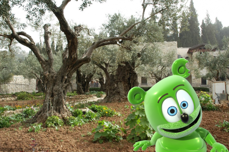 mount of olives, israel, hebrew, hebrew song, hebrew music, childrens music, kids music, kids song, gummy bear, gummybear, gummibar, i am a gummybear, gummy bear song, the gummy bear song, travel, tourism,