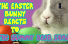 easter bunny reacts to the gummy bear song